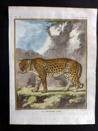 Buffon First Edition C1770 Antique Hand Col Print. Male Panther 9-11